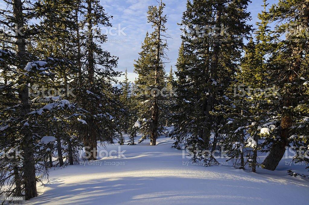 Snowy Winter Trees stock photo