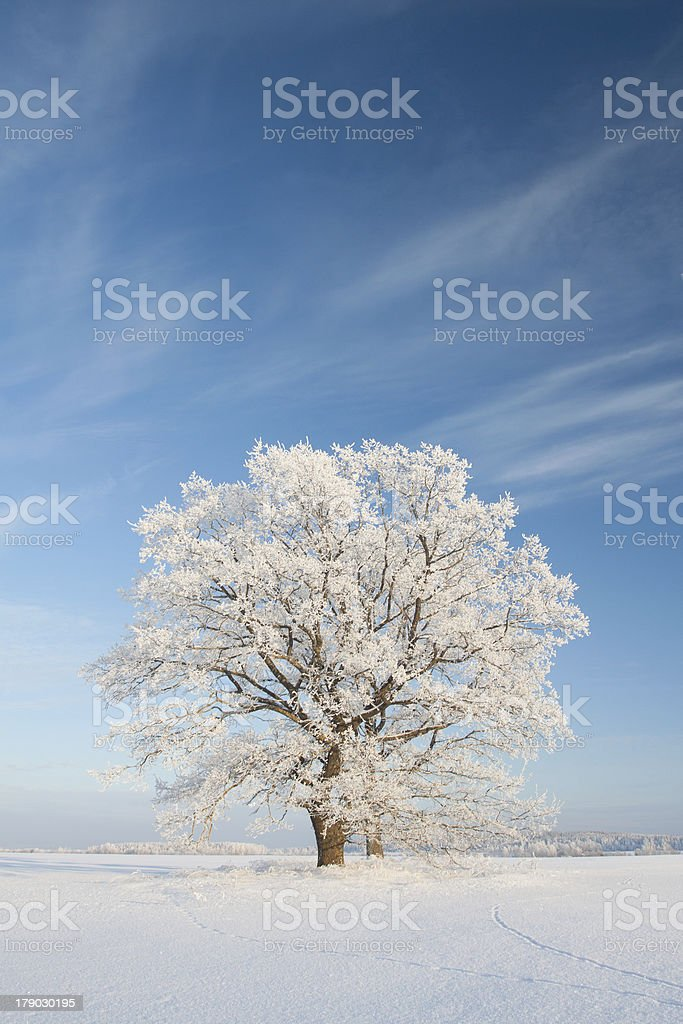 Snowy winterday royalty-free stock photo
