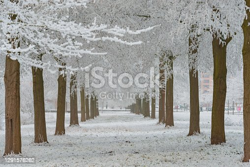 Snowy wintry landscape in the city park of Kampen, The Netherlands . People are walking on the footpaths and taking pictures of the frozen winter landscape, The Netherlands . The people are standing on a bridge in the city park during a beautiful winter day with snow on the trees and plants. The park is just outside of the ancient city centre of Kampen, a Hanseatic League city.