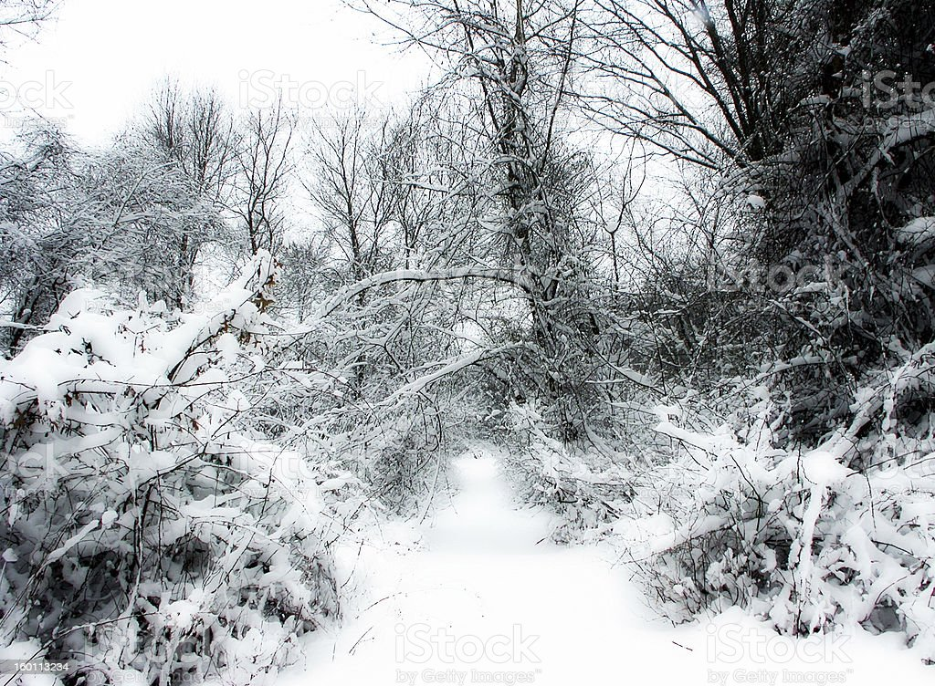 Snowy Woods royalty-free stock photo