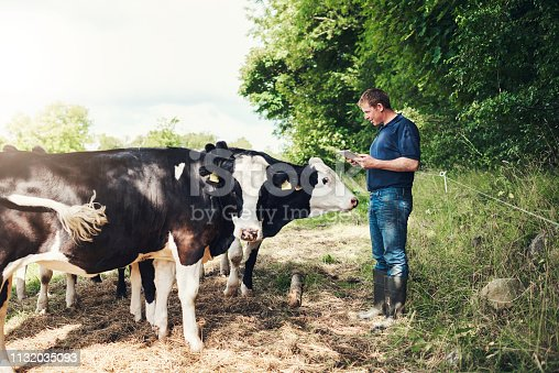Shot of a cheerful young male farmer browsing on a digital tablet while standing next to his cows outside on his land during the day