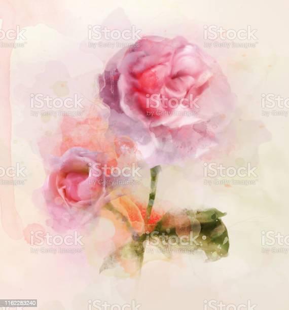 So like a rose picture id1162283240?b=1&k=6&m=1162283240&s=612x612&h=cs3snzf517z5l0kpgdrf 13uaxgg2lp5xbdu hojuii=
