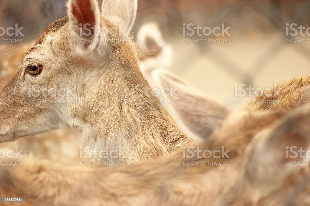 So many baby deers inside stock photo