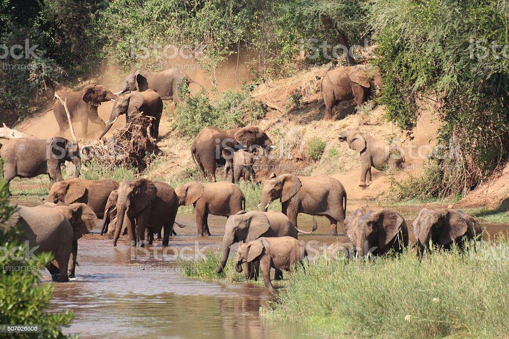 So many Elephants stock photo