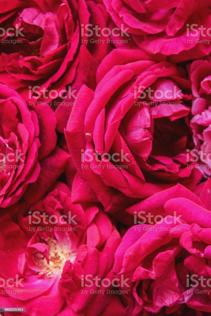 So many  fresh rosses Lizenzfreies stock-foto