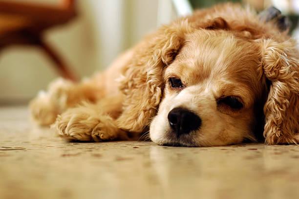 So sleepy stock photo