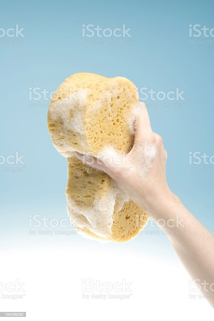 Soapy Sponge royalty-free stock photo