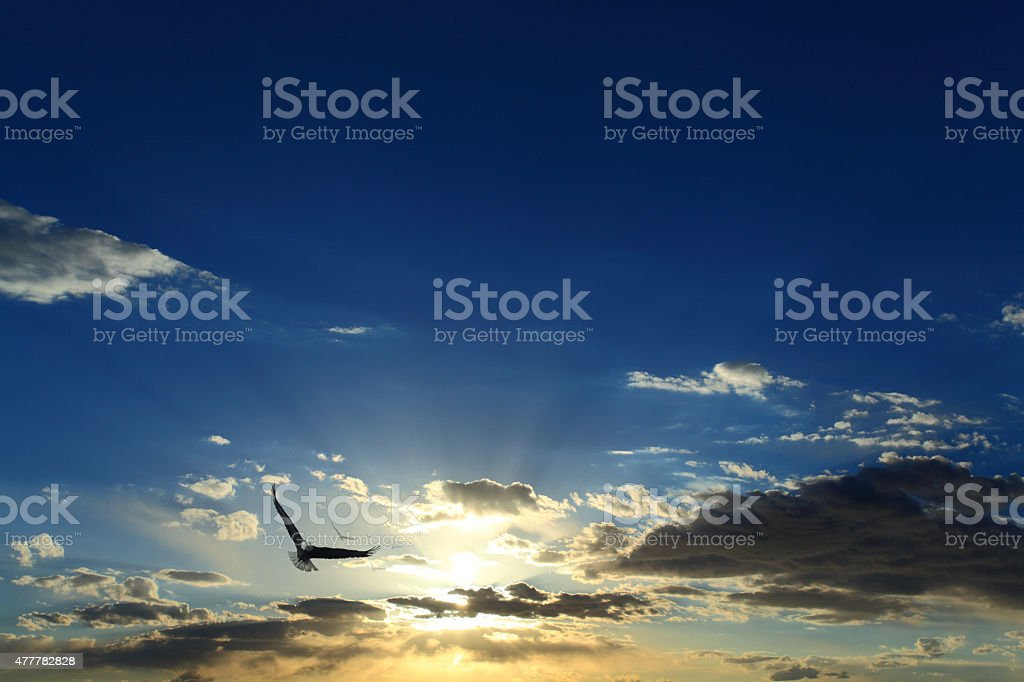 Soaring eagle - foto stock