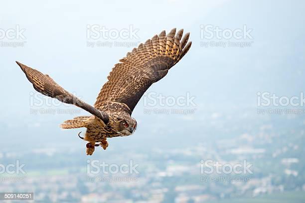 Soaring eagleowl picture id509140251?b=1&k=6&m=509140251&s=612x612&h=hnlxm0qucfja5thvpqnayu77q m9nwvlkwumzdvcycs=