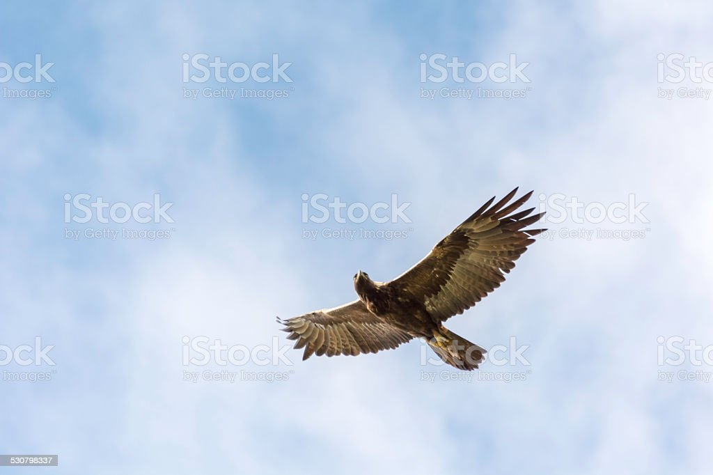 Soaring stock photo