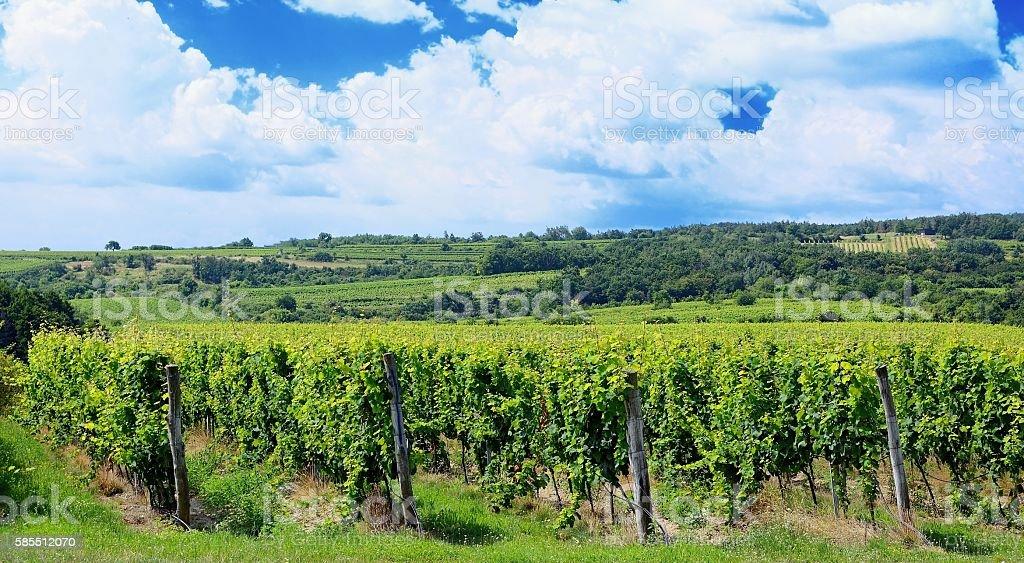 Sobes Moravian vineyard stock photo