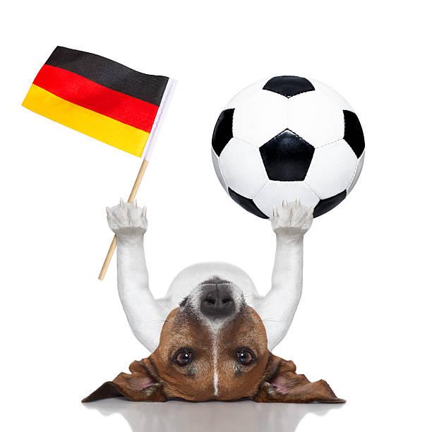 chien de football - titre mondial photos et images de collection