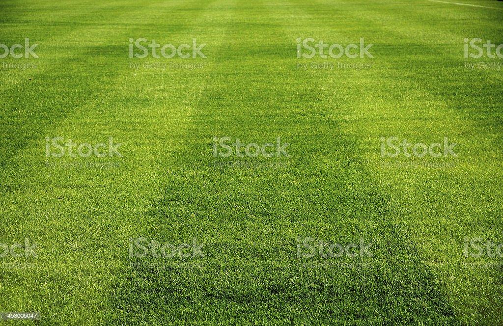 grass soccer field. Soccer Field Stock Photo Grass