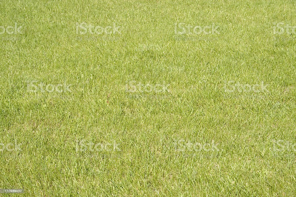 Soccer football court with green grass royalty-free stock photo