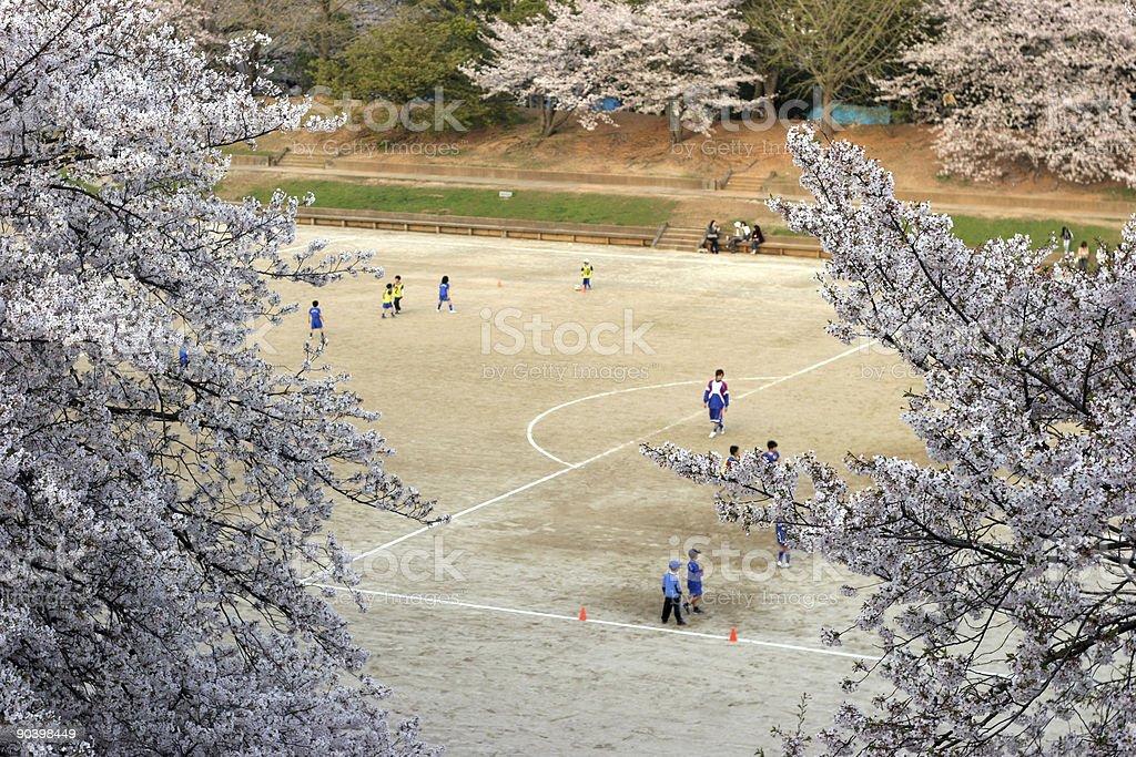 Soccer under the sakura cherry trees royalty-free stock photo