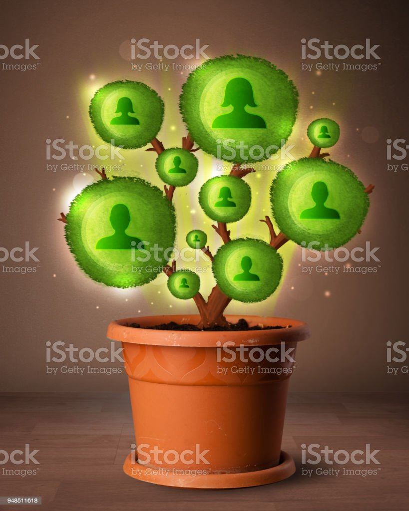 Social network tree coming out of flowerpot stock photo