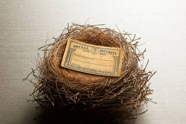 Social Security Card Resting On Bird's Nest A social security card rests in a birds nest conveying the concept of social security income being considered an intregal part of ones financial nest egg. nest egg stock pictures, royalty-free photos & images