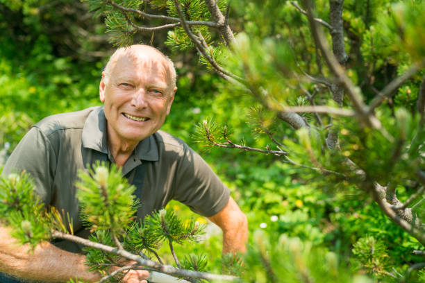 Social Seniors, smiling active senior in wood happy fit senior man looking through mountain pines on sunny summer hiking day forester stock pictures, royalty-free photos & images