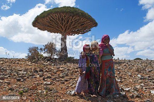 istock Socotra: a Dragon Blood tree and the little girls from the island, sellers of the red sap produced by the endemic tree in the forest of Shibham 801273074