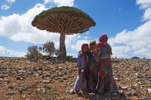 socotra: un arbre de sang de dragon et les petites filles de l'île, vendeurs de la sève rouge produite par l'arbre endémique à la forêt de shibham - nuage 6 photos et images de collection