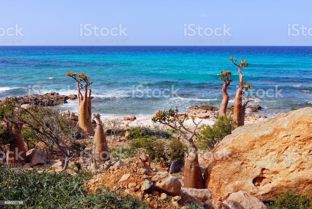 Socotra endemics stock photo