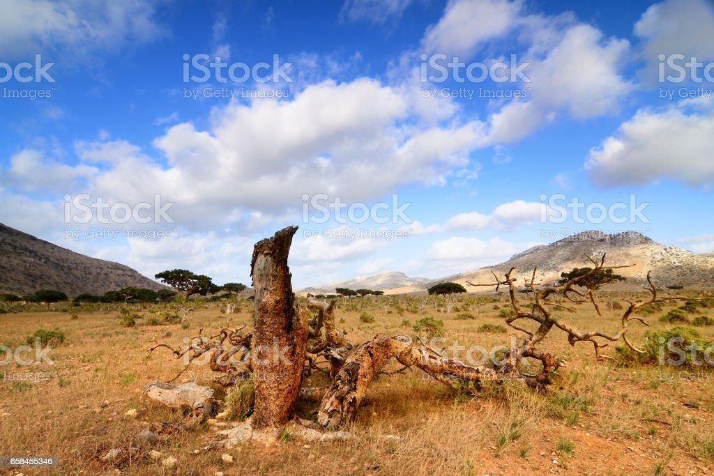 Socotra island stock photo