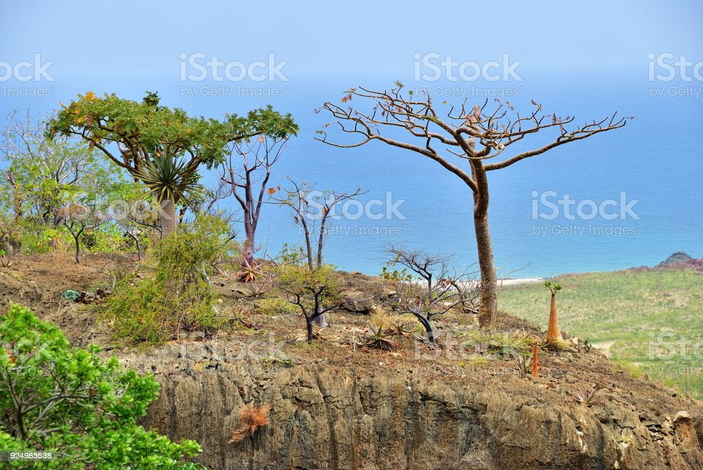 Socotra island, Yemen, Africa stock photo