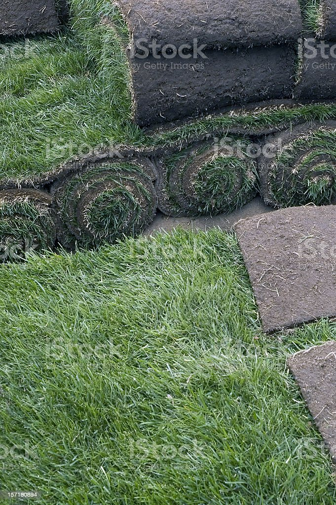 Sod Rolls for an Instant Green Grass Lawn stock photo