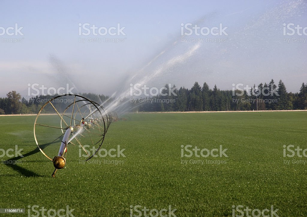 sod sprinkler system royalty-free stock photo