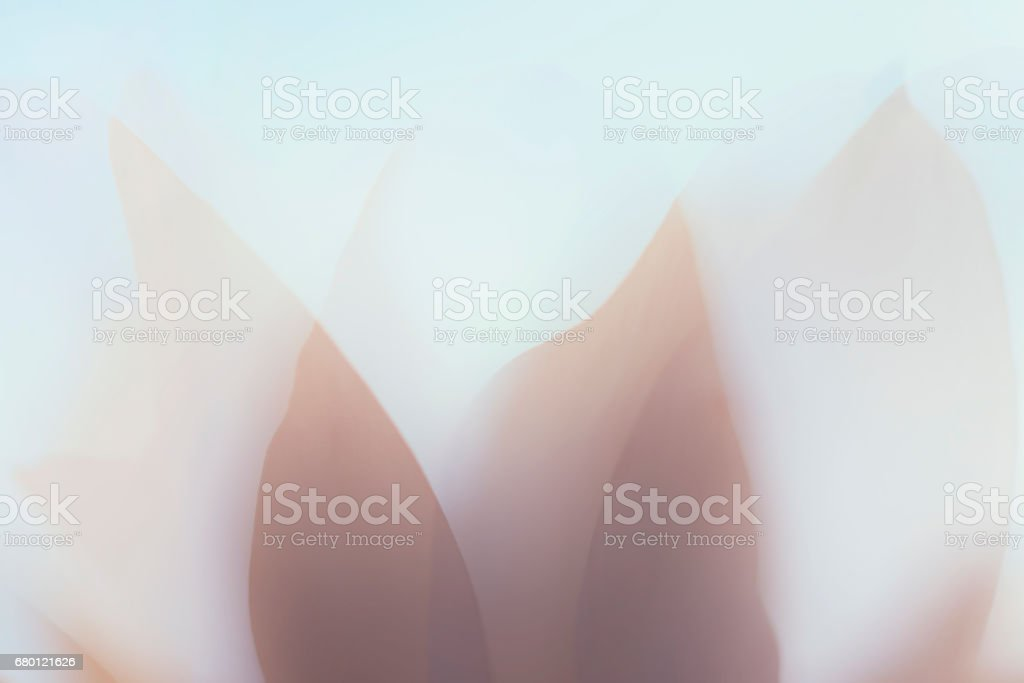 Soft abstract blossom in double exposure stock photo