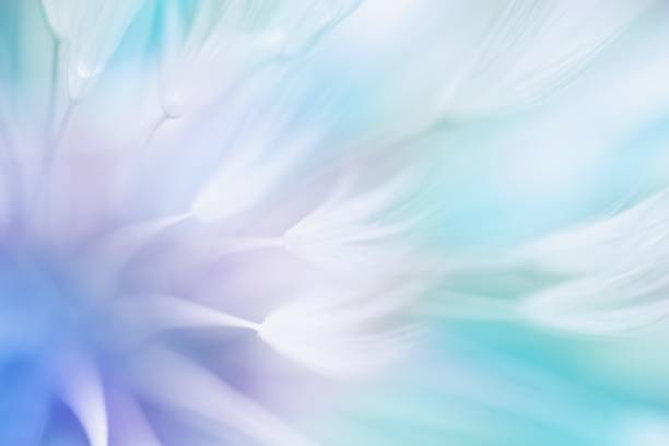 Soft abstract gradient background abstract dandelion picture id1190433936?b=1&k=6&m=1190433936&s=612x612&w=0&h=ofntwwfexx xchytoz2bcke2kniqywybkvrlmgl7q8w=