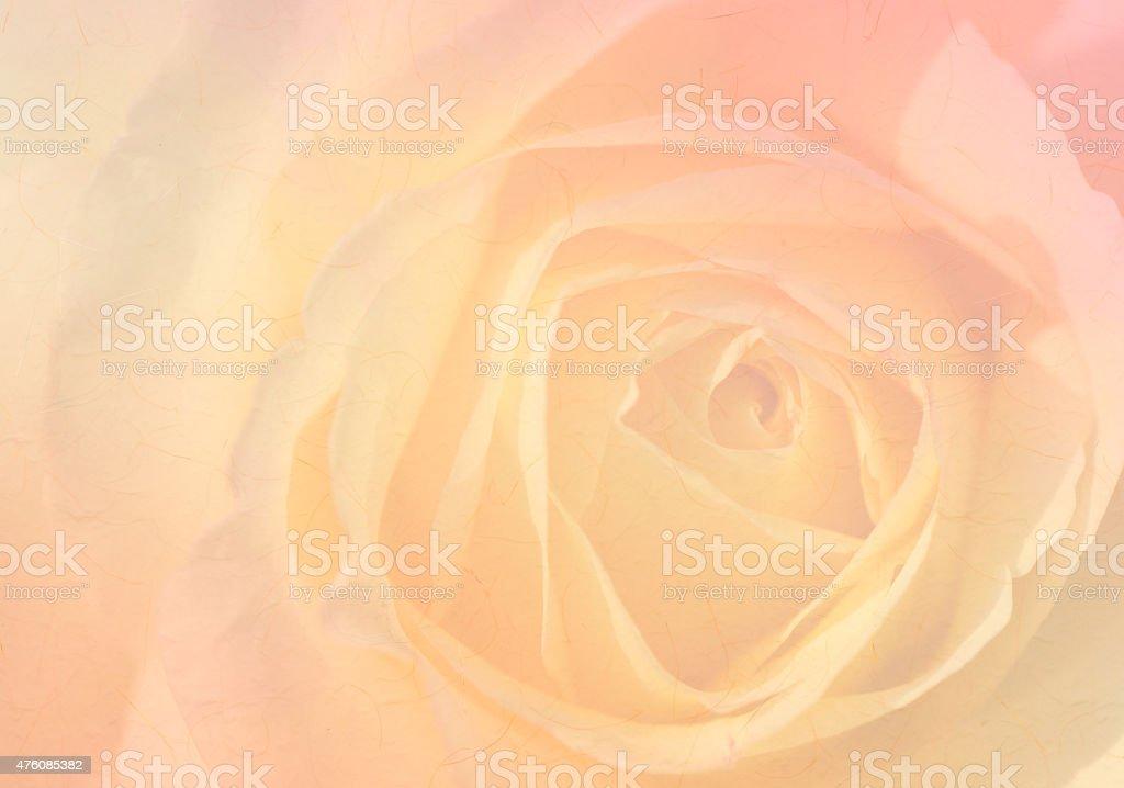 Suave fondo de rose, textura de papel. - foto de stock