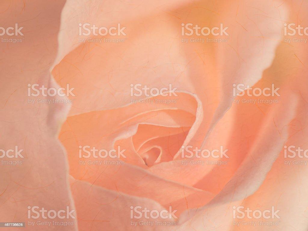 Suave fondo de rosas - foto de stock