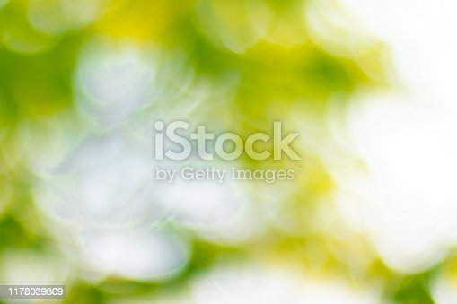 Soft blurred sweet green bokeh nature abstract background.