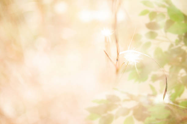 soft brown thistles, ficus tree overlay in meadow. defocused. nature. - soft focus stock photos and pictures