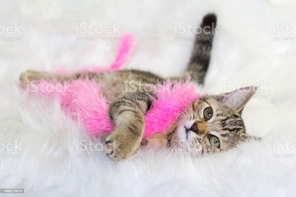Soft cat stock photo