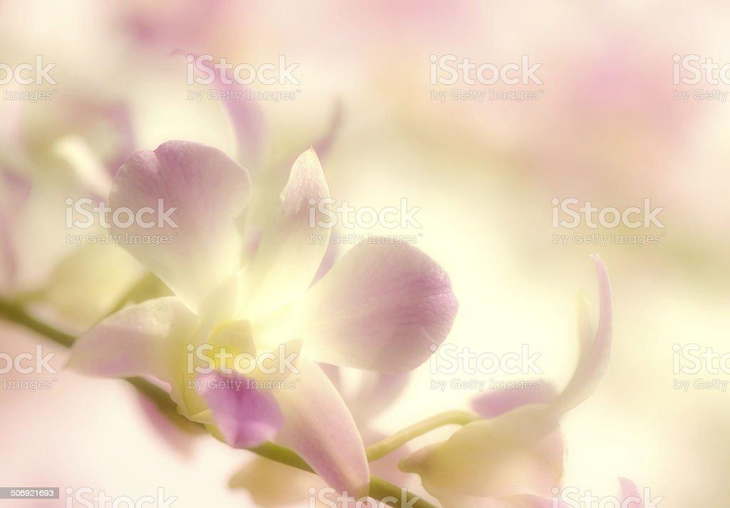 Los tonos suaves de color orchids fondo. - foto de stock