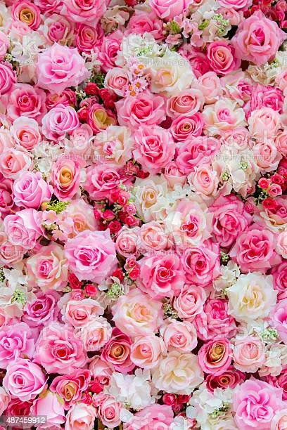 Soft color roses background picture id487459912?b=1&k=6&m=487459912&s=612x612&h=7ot hglxqmey2ygldnknmcasuduzelnvmqonmb64t 8=