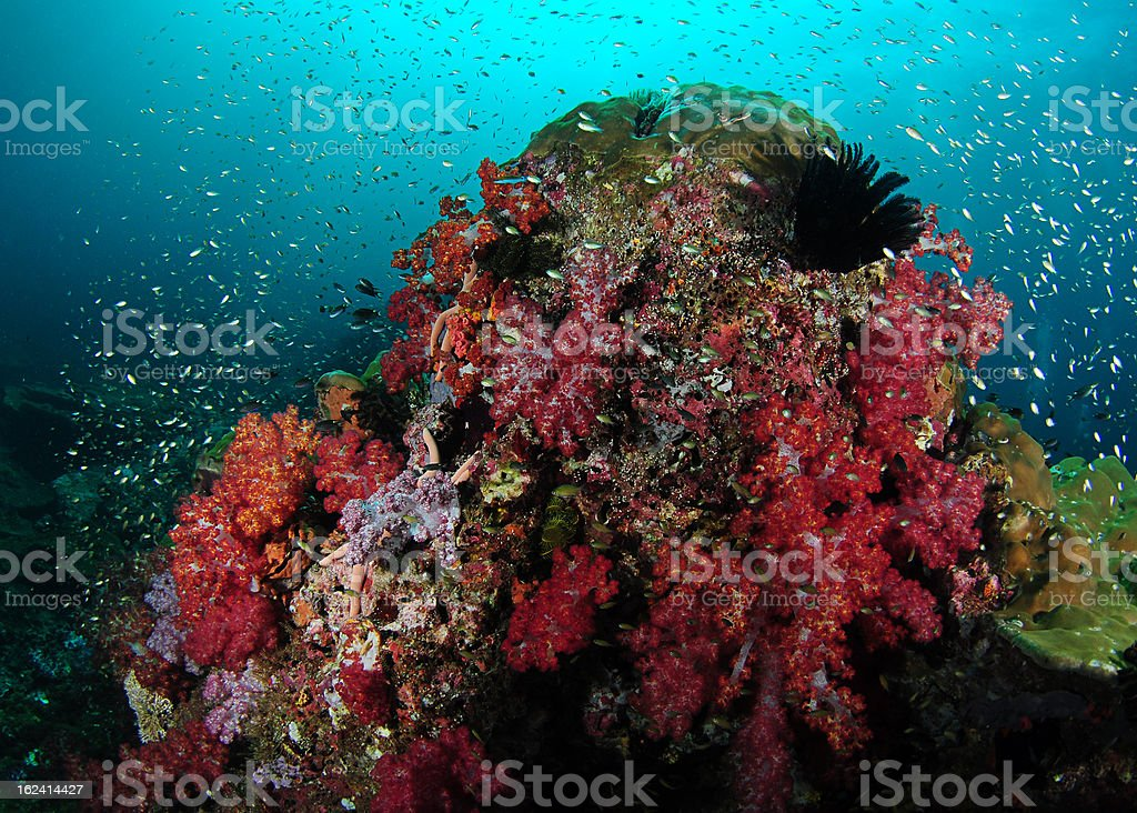 Soft Coral and Rock royalty-free stock photo