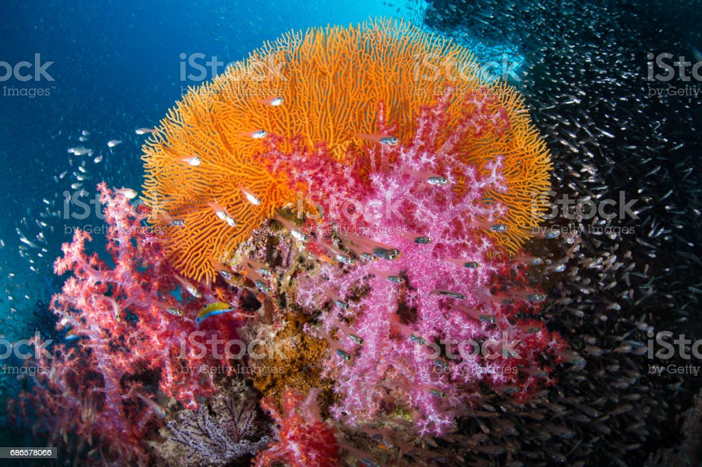 Soft coral garden. royalty-free stock photo