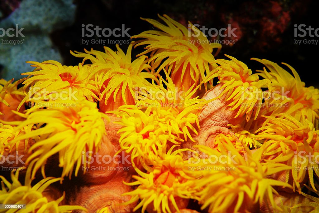 soft coral stock photo
