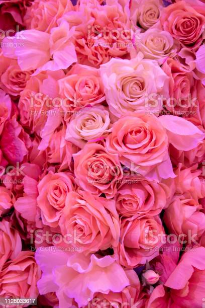 Soft coral pink color roses background picture id1128033617?b=1&k=6&m=1128033617&s=612x612&h=cpcow7o7zbipcfqihwxqnjby 0htfq7zup02rmlbf3e=