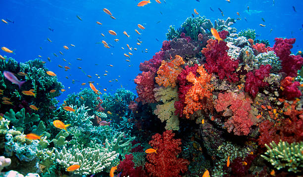 soft coral reef scene - fiji stock photos and pictures