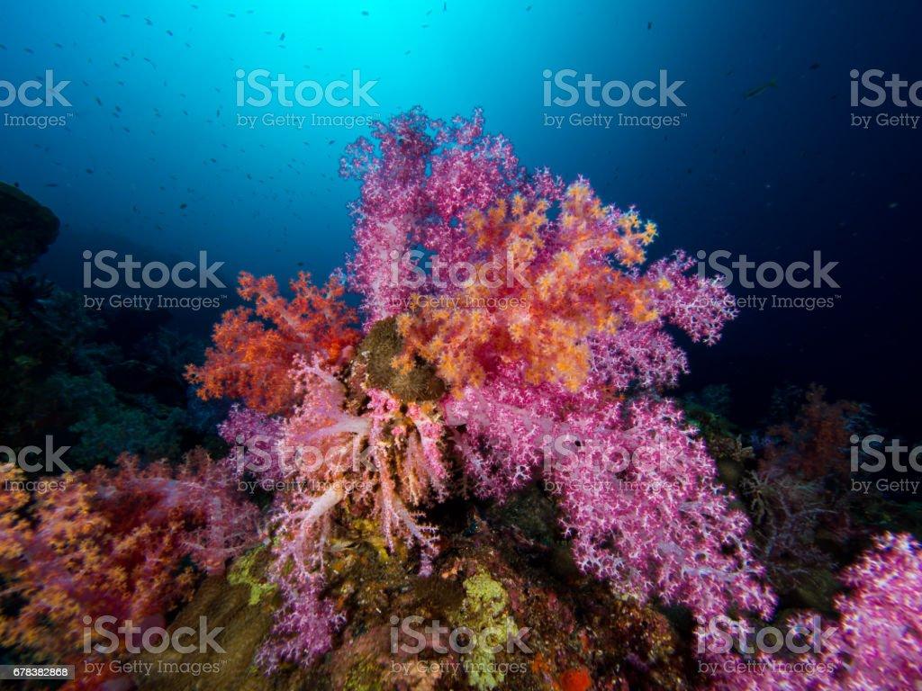 Soft corals stock photo