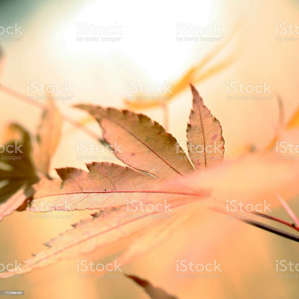 Soft Fall royalty-free stock photo