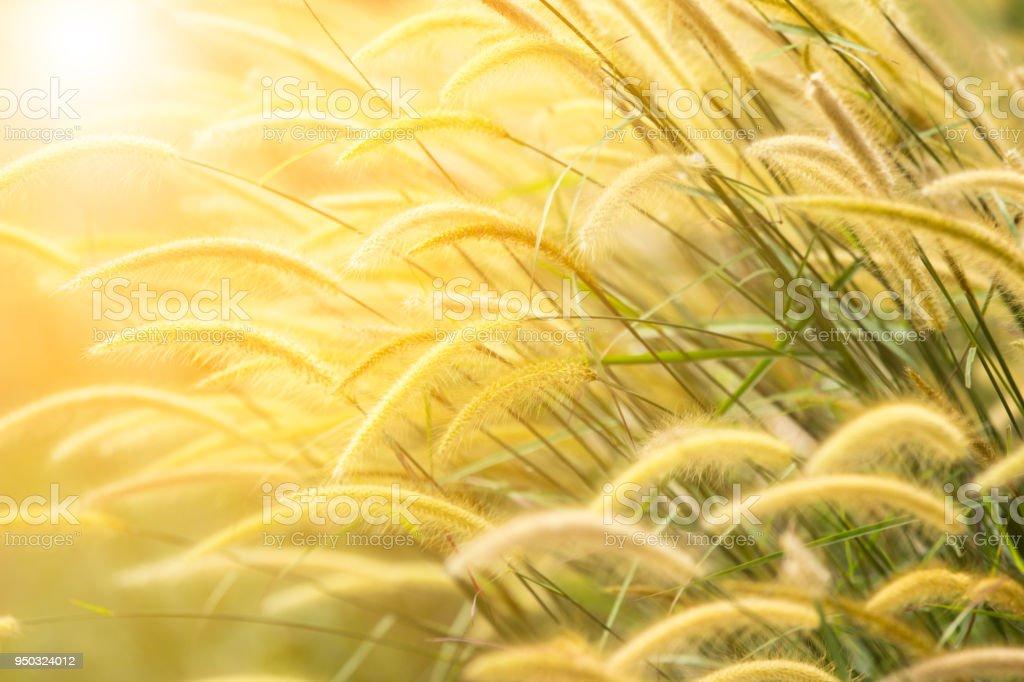 Soft-Fokus und unscharfen Grass Blume – Foto