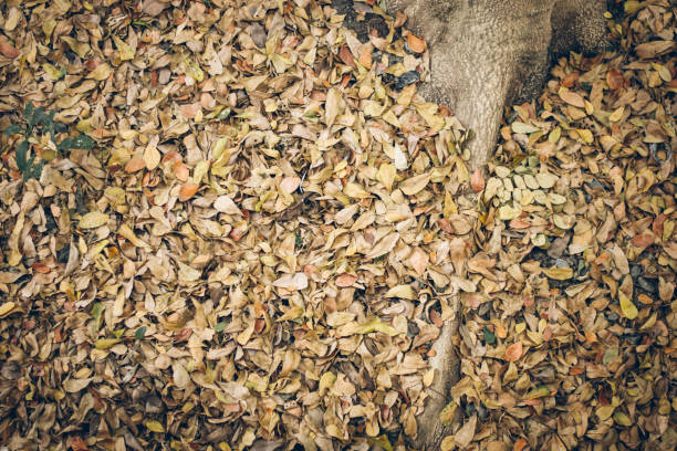 soft focus Dry leaves background,Dried leaves stock photo