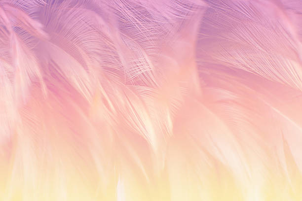 Soft focus fashion Color Trends fluffy feathers abstract texture background stock photo