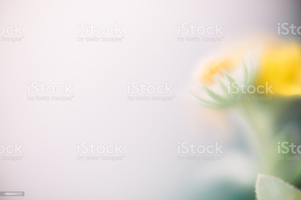 Soft focus flower background royalty-free stock photo