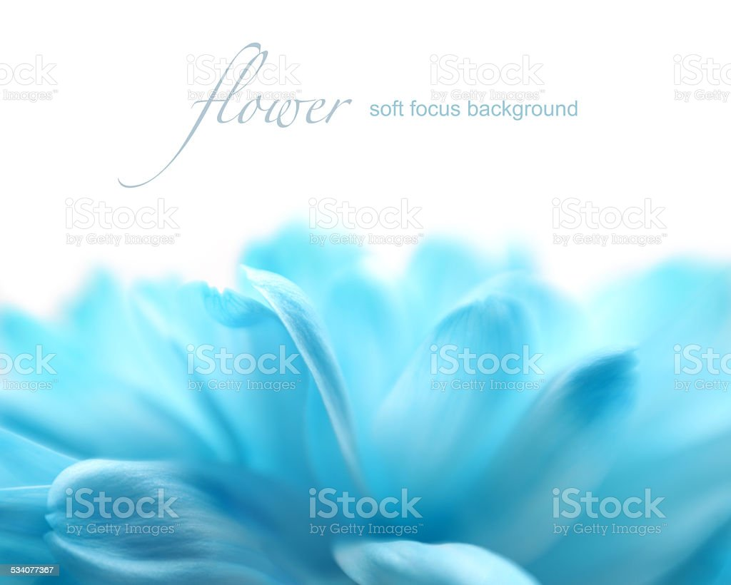 Soft focus flower background with copy space. stock photo
